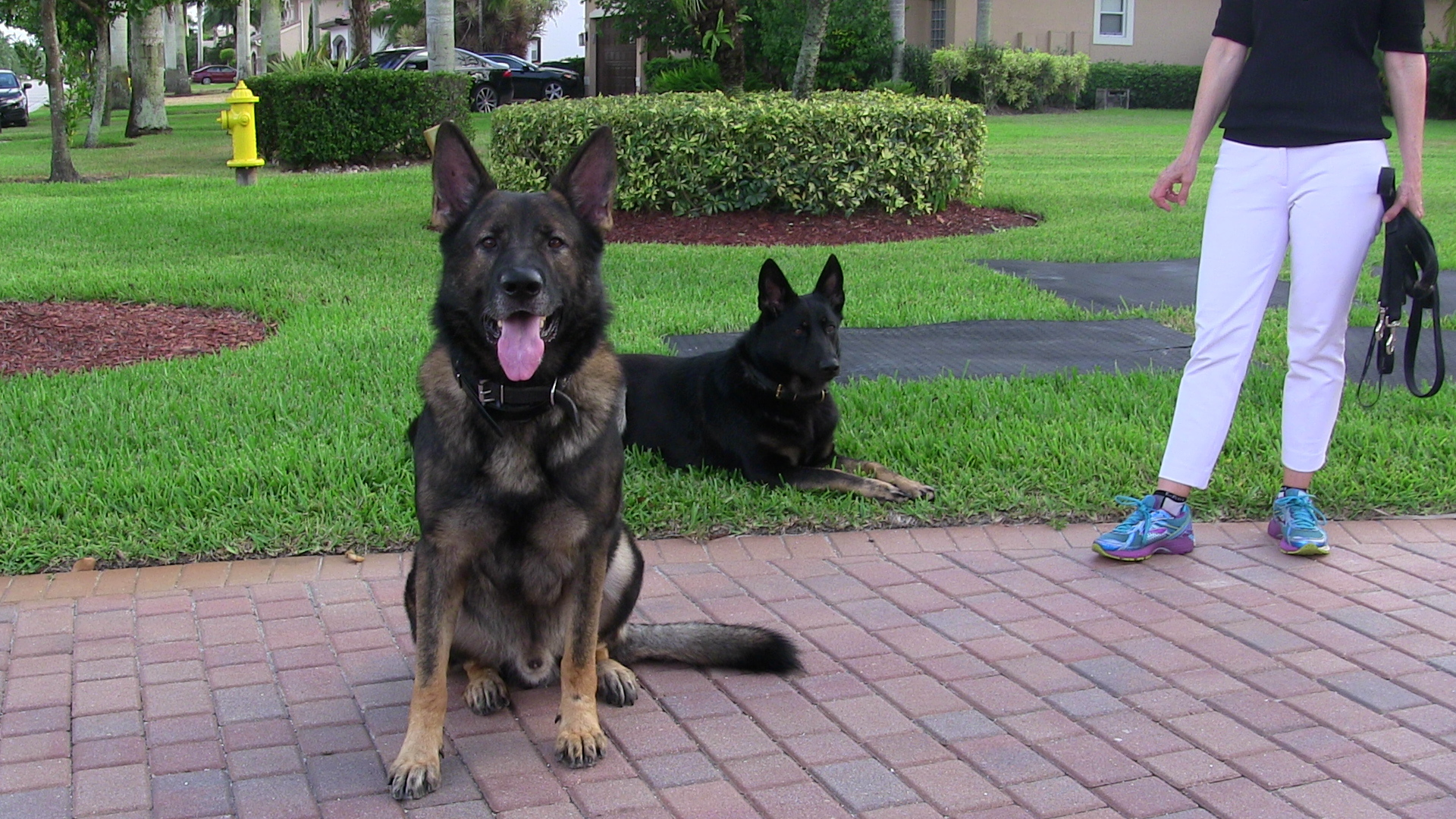 Richard Heinz, Miami Dog Whisperer, Dog trainer, dog behaviorist, dog trainer in miami, miami dog training, doral dog training, dog training expert, best dog trainer, aggression trainer, famous dog trainer, dog whisperer, protection K9 training, protection dog training, family protection dog, personal protection dog, german shepherd, dog training in miami, dog trainer in miami, doral dog trainer, coral gables dog trainer, miami beach dog trainer, dog trianer to the stars, positive dog training, obedience dog training, free evaluation, dog trainer, miami dog whisperer